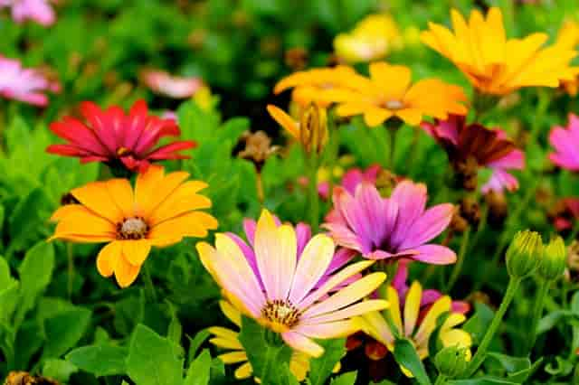 Flowers Name In Hindi and English with Pictures (फूलों के नाम)   List of Flowers Name In Hindi 1