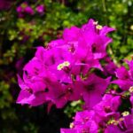 Flowers Name In Hindi and English with Pictures   List of Flowers Name In Hindi  flowers name in hindi   flowers name in hindi and english   flowers name in hindi pdf   40 flowers name in hindi   list of flowers name in hindi   flowers name in hindi to english   hibiscus flower name in hindi