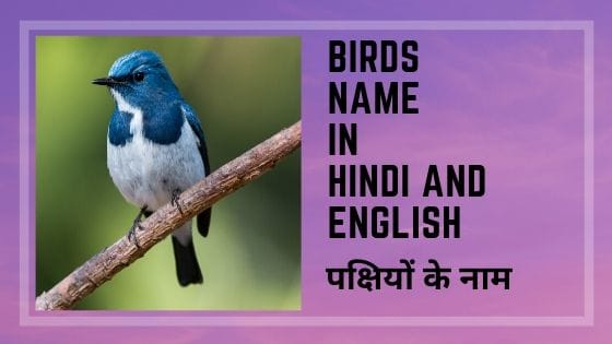 pakshiyon ke naam | pakshiyon ke naam sanskrit mein | pakshiyon ke naam hindi mein | pakshiyon ke naam english mein | pakshiyon ke naam in hindi | pakshiyon ke naam angreji mein | kalgi wale pakshiyon ke naam in hindi | birds name in hindi | birds name in hindi and english | birds name in hindi pdf | birds name in hindi with picture | kingfisher bird name in hindi |five birds name in hindi