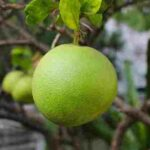 fruits name in hindi and english | fruits name hindi and english |fruits name in english and hindi | fruits name in hindi from english words | all fruits name in hindi and english | fruits name in hindi to english | 50 fruits name | fruits name in hindi from english words | fruits name list | fruit names with pictures
