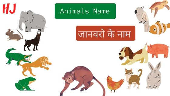 animals name in hindi | wild animals name in hindi | animals name in hindi and english | animals name in hindi and english with photo | pet animals name in hindi | water animals name in hindi | domestic animals name in hindi | all animals name in hindi